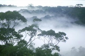 alte regenw lder unersetzlich f r den erhalt der. Black Bedroom Furniture Sets. Home Design Ideas
