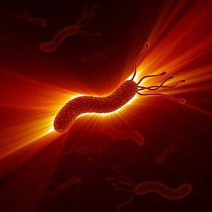 Das bakterium helicobacter pylori ist in der lage im sauren milieu