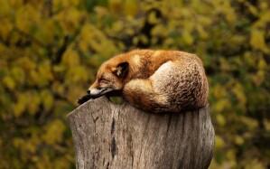 Schlafmangel bleibt Schlafmangel thumbnail