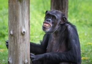 Haben Affen Humor? thumbnail